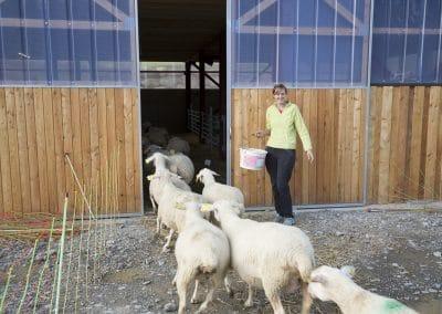 L'entrée des brebis pour la bergerie.