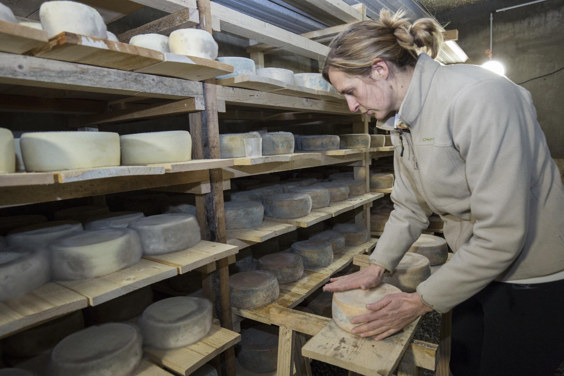 L'affinage des fromages dans la cave d'Amelina